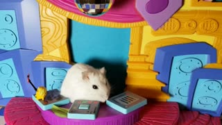 Hammy New Year! - cute hamster video