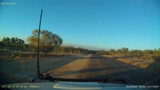 Kangaroo Jumps in Front of Car - Video