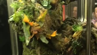 Man dressed as weed plant on train
