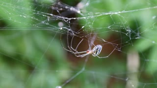 Up-close view of a spider - Video