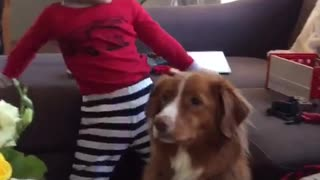 Pup is not impressed with new baby 
