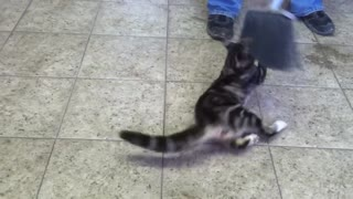 Funny cat with broom - Video