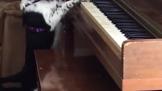 Pets are musical masters