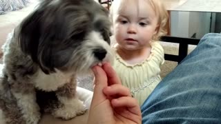 Puppy and baby both eagerly await snacks - Video