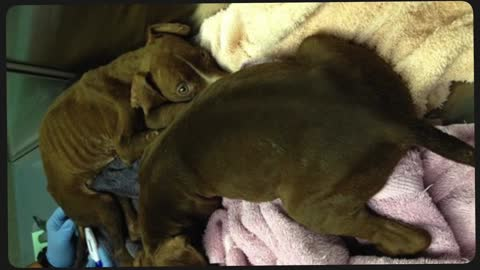 Abused, sick and starving puppies make full recovery