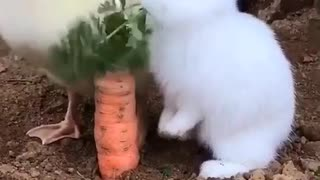 Bunny is also fast eating