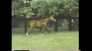 12 Year Old Secretariat Joyfully Running Through His Pasture - Video