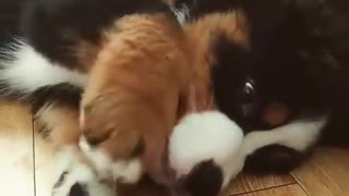 Adorable puppy playing with ball