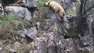 Bear in River - Video