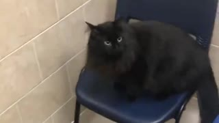 Clumsy cat makes a mess of the vet's office