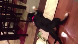 Wander What Is Like Dog That Dont Wanna Walk? - Video