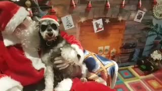 Dogs meet Santa Paws