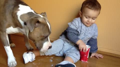 Baby gives pit bull a