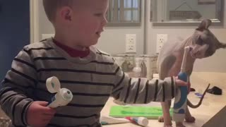 Toddler and sphynx brush teeth together - Video