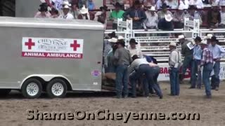 A Cruel And Deadly Rodeo In Cheyenne - Video