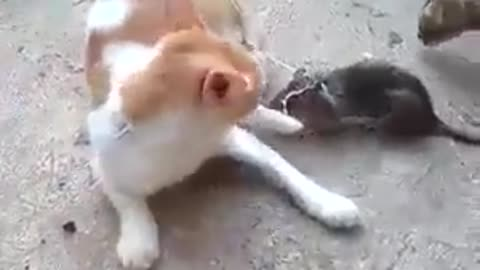 Very Funny Cat and mouse