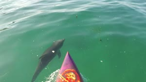 Paddle boarding with baby dolphins - Video