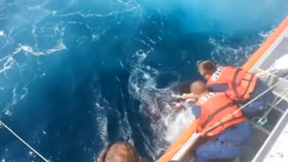 U.S. Coast Guard rescues 800-pound turtle off Jersey coast - Video
