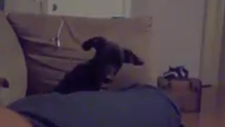 Funny dog tilting its head when she hears her sister's name - Video