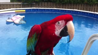 Jackson the Parrot dances to 'Billie Jean' - Video