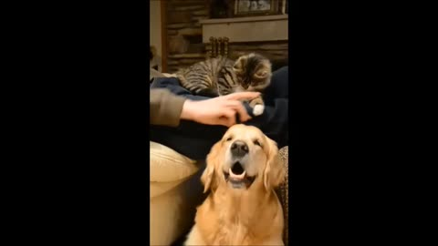 Jealous kitten steals attention from dog