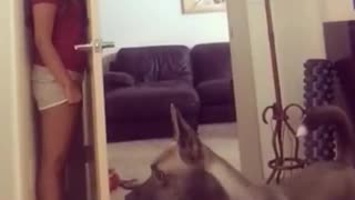 funny animal - crazy dog or crazy girl - Video