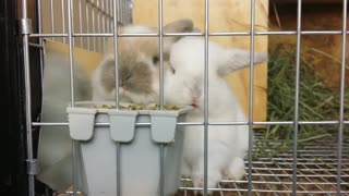 Baby bunnies enjoying a snack will melt your heart - Video