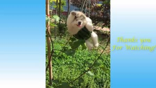 Cute Pets And Funny Animals Compilation_#1