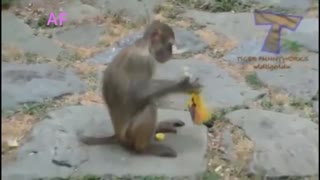 Funny Animals ; Funny video HHH...