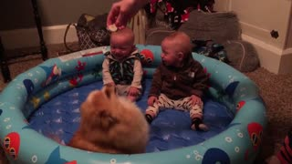 Twin Babies Can't Stop Giggling At Pomeranian Pup