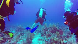 Turks & Caicos Diving - Shark Week (Test Edit) - Video