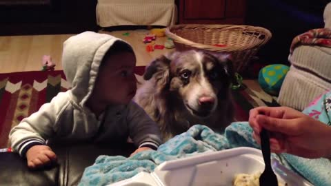 "Mom Offers Baby A Treat If He Says ""Mama"", Dog Says It First"