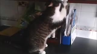 Two cats who love catnip - Video