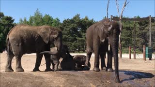 Elephant enjoys cool spray on hot day  - Video