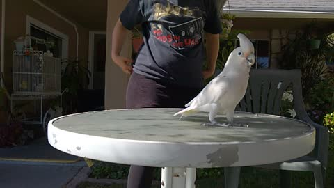 Frankie the cockatoo in slow mo silliness