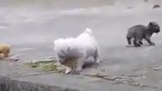 A small dog plays a small bird