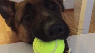 Dog makes it crystal clear he's ready for playtime - Video