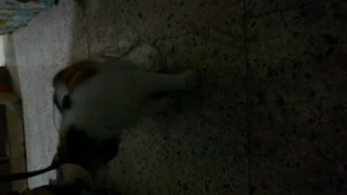 My cat looking for some rats to play with - Video