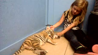 Little Girl Kisses A Baby Tiger - Video