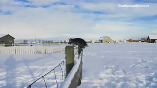Brown dog jumps over fence in the snow