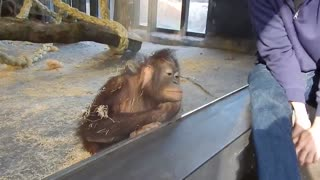 Monkey Reacts to Magic Trick At The Zoo!