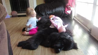 Little girl preciously sings to her Newfoundland dog - Video