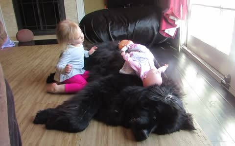 Little girl preciously sings to her Newfoundland dog