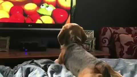 Puppy lying down quietly watching paw patrol like a kid