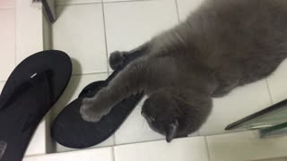 Cat caught behaving inappropriately with owner's slippers - Video