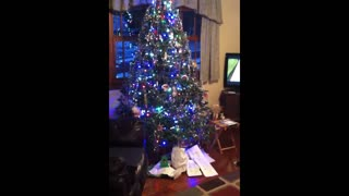 Sweet dog can't hold in his christmas excitement - Video