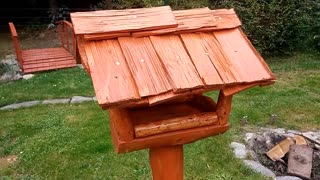 Feed for Birds