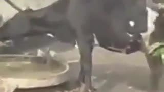 cow in india seen using a pump - Video