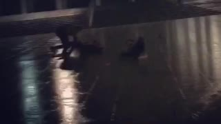Guys running in rain slip and fall down  - Video