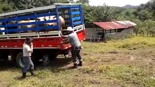 Downloading the Cattle